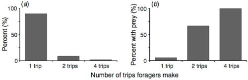 Foraging behaviour of 177 individually marked ants. From Reid et al., 2013 Aus J Zool.
